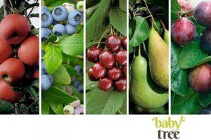 5 fruitsoorten Baby Tree met logo 1